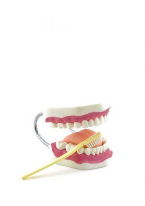 Модель ухода за зубами