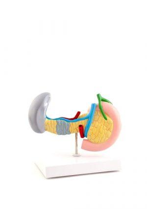 Модель заболеваний поджелудочной железы, селезенки и желчного пузыря