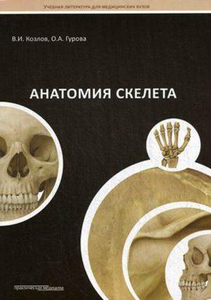 Анатомия скелета