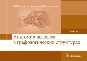 Анатомия человека в графологических структурах