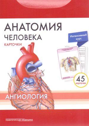 Анатомия человека. Карточки. Ангиология