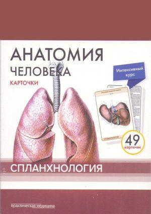 Анатомия человека. Карточки. Спланхнология