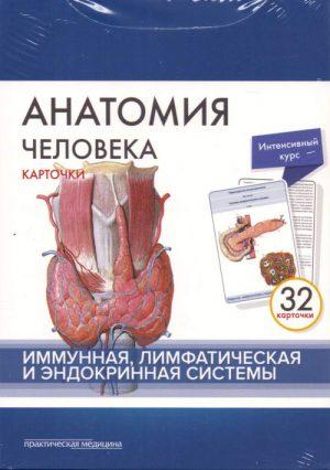 Анатомия человека: карточки. Иммунная, лимфатическая и эндокринная системы
