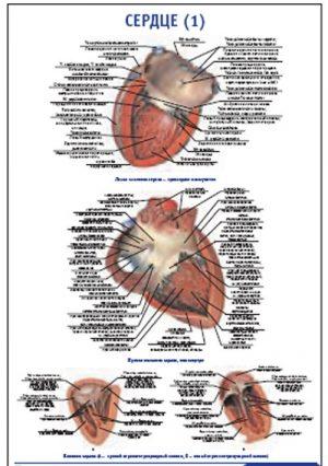 """Плакат """"Сердце 1"""""""