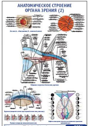 """Плакат """"Анатомическое строение органа зрения 2"""" (490*650)"""
