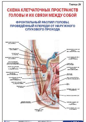 """Плакат """"Схема клетчаточных пространств головы и их связи между собой. Фронтальный распил головы, проведенный кпереди от наружного слухового прохода"""" ("""