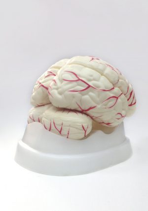 Бюджетная модель головного мозга, 8 частей