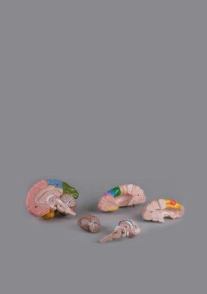 Модель головного мозга. 5 частей