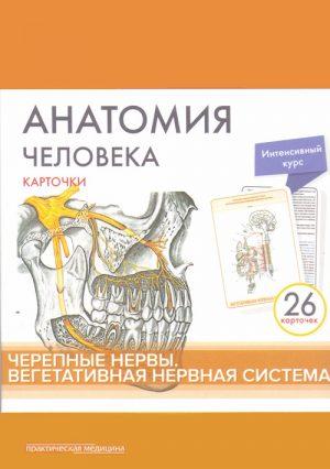 Анатомия человека. Черепные нервы. Вегетативная нервная система. Карточки
