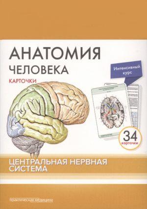 Анатомия человека. Карточки. Центральная нервная система