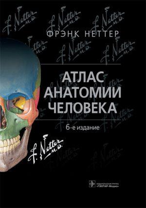 Атлас анатомии человека Неттера