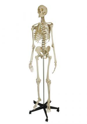 Безопасная модель скелета