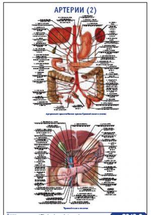 "Плакат ""Артерии 2"" Pg0049-2"