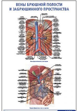 """Плакат """"Вены брюшной полости и забрюшинного пространства"""" Pg0055"""