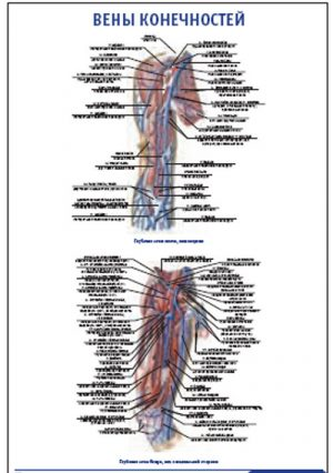 """Плакат """"Вены конечностей"""" Pg0057"""