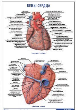 """Плакат """"Вены сердца"""" Pg0060"""