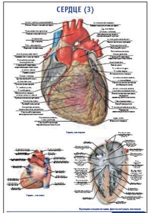 """Плакат """"Сердце 3"""" Pg0072-3"""