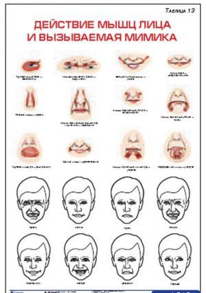 """Плакат """"Действие мышц лица и вызываемая мимика"""" Pgk013"""