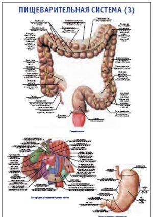 """Плакат """"Пищеварительная система 3"""" Pg0063-3"""