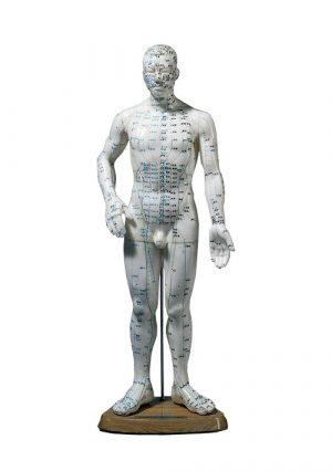 Мужская акупунктурная модель